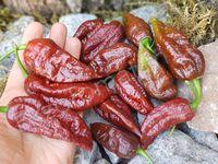 "Перец ""Bhut Jolokia Caramel"""