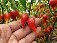 "Перец ""Biquinho Red"""
