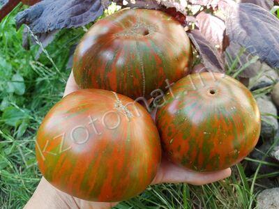 Tomato 'Chocolate Stripes'
