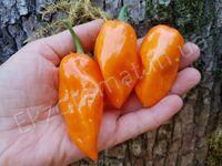 """Перец """"Orange Habanero"""""""