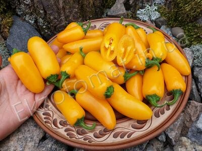 Pepper 'Jalapeno NuMex Orange Spice'