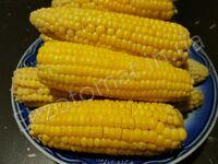 Кукуруза сахарная «Тройная сладость»