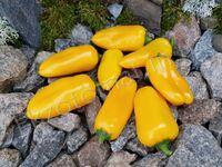 """Перец """"Mini Sweet Pepper Yellow"""""""