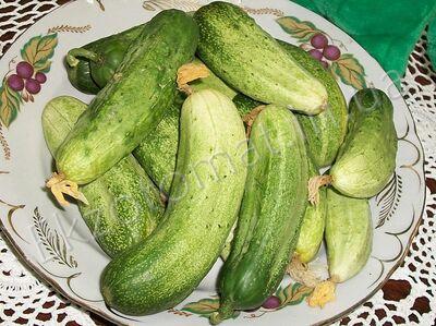 Огірок 'Айсидора'