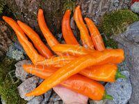 """Перец """"Ramiro Orange"""""""