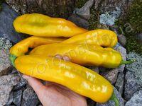 """Перец """"Ramiro Yellow"""""""
