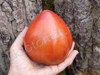 """Томат """"Reinhard's Chocolate Heart"""""""
