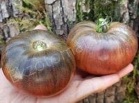 "Томат ""Russian Cossack Tomato"""
