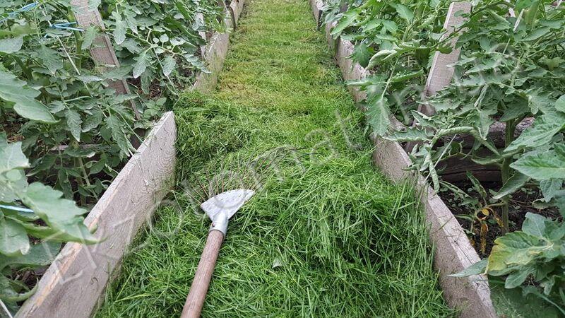 Как мы мульчируем и рыхлим почву?