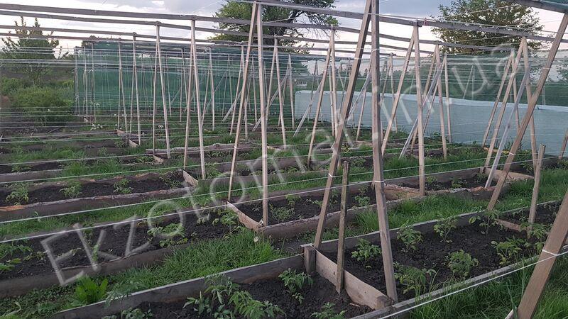 Как пересаживать рассаду в открытый грунт?