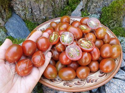Tomato 'Stormin Norman'