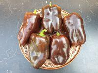 "Перец ""Sweet Chocolate"""