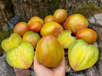 Tomato 'Taiga'