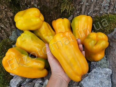 "Перец ""Yellow Monster"""